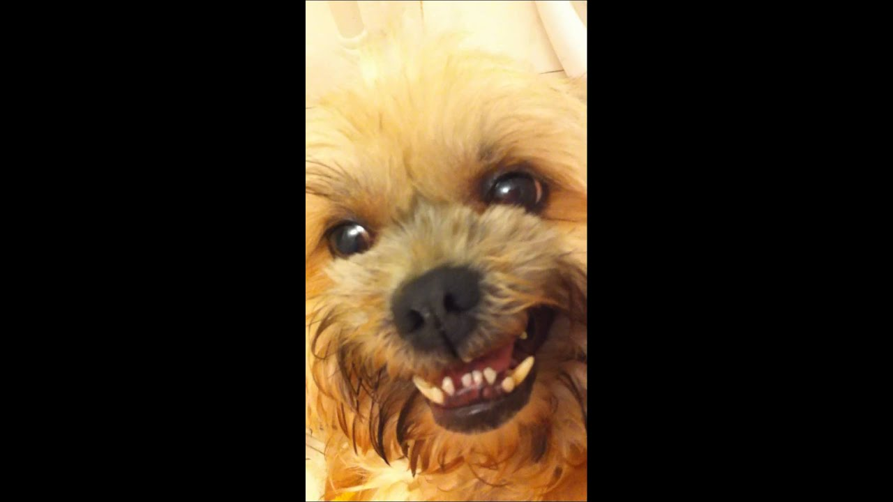CUTE puppy dog HATES the Camera and GROWLS TOO FUNNY OMG - YouTube