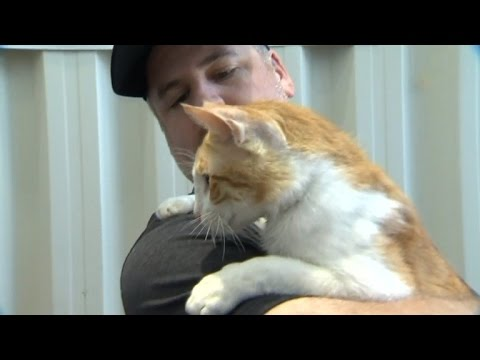 Watch This Veteran Reunite With Abandoned Kitten He Cared For In Baghdad