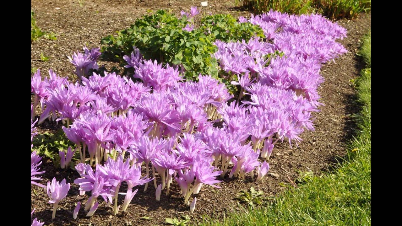 Осенние многолетние садовые цветы фото с названием