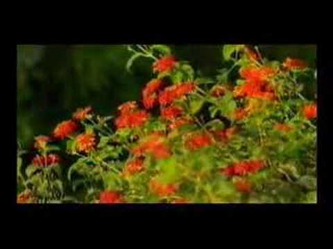 Sura Rehman Recitation(Qari Abdul Basit Samad)Part 1