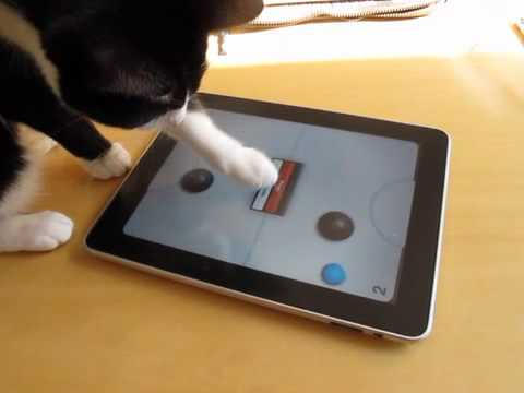 cat meets iPad