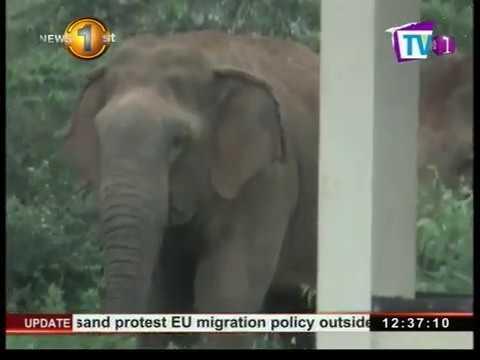 human elephant confl|eng