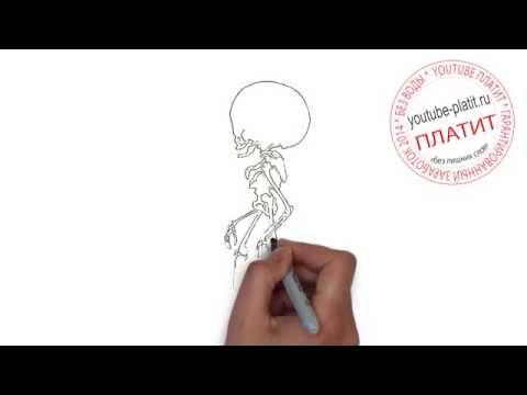 Видео как нарисовать полного человека