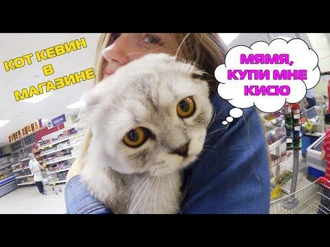 Фиги - Про кота