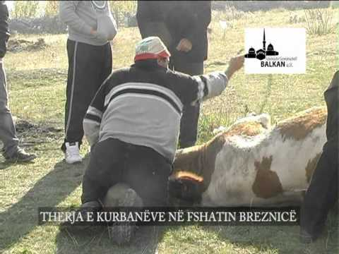 Rijad Demiri, Xhamia Ballkan, therja e kurbaneve, Horizonti, Ternoc, Bujanoc, Lugina