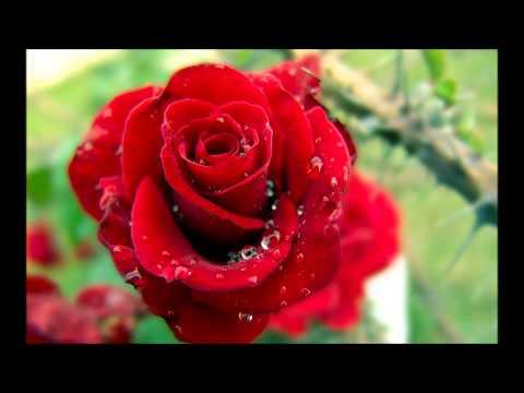 'seerat Hazrat Khadija Al-kubra (r.a)' By Qari Abdul Hafeez Faisalabadi video