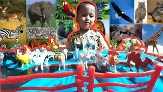 BELAJAR MENGENAL NAMA DAN SUARA HEWAN MAINAN    Learn animals name and sounds for kids
