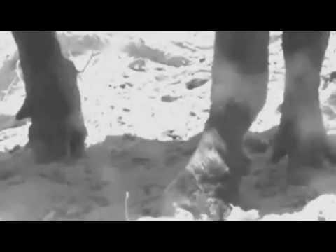 Komodo Island Reptilian Dementia