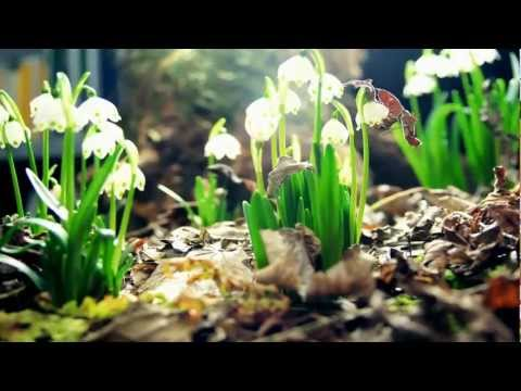 Amazing Nature Full HD 1080p :Time Lapse