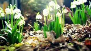 Amazing Nature Full HD 1080p :Time Lapse
