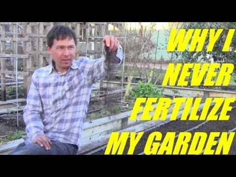 Why I Never Fertilize My Vegetable Garden and Get Better Results without it