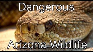 Dangerous Arizona Wildlife and Creepy Crawlers | Living in Arizona