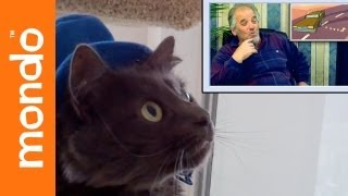 download lagu Cats React To Elders Reacting To Happy Tree Friends gratis