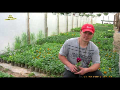 Валера сад огород