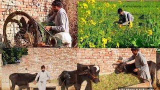 My Daily Routine Village Life Pakistani Village Life Village Vlog