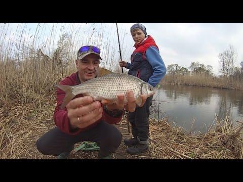 как поймать плотву весной на реке в мае и на что ее ловить