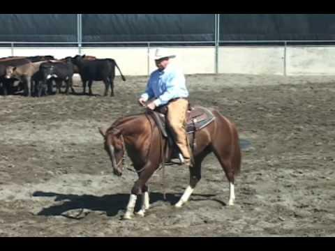 Cutting Horse Training, 3-yr-old, part 1