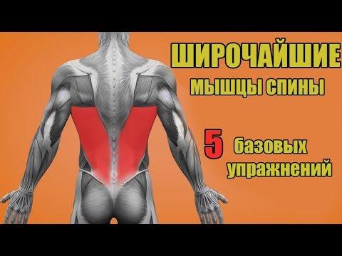 ШИРОЧАЙШИЕ МЫШЦЫ СПИНЫ. 5 БАЗОВЫХ УПРАЖНЕНИЙ. + ОШИБКИ УБИВАЮЩИЕ ПРОГРЕСС!