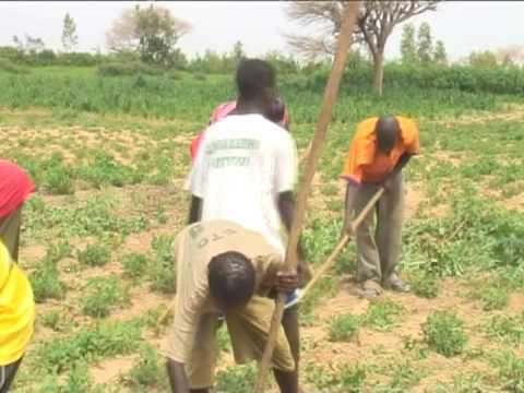 Senegal: Le Petit Paysan (The Little Farmer)