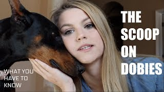 10 THINGS YOU NEED TO KNOW BEFORE GETTING A DOBERMAN