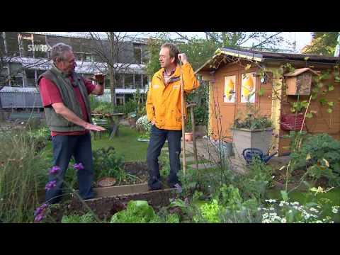 Gründüngung Für Das Gemüsebeet
