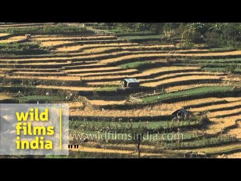 Terrace paddy fields in North-east, India