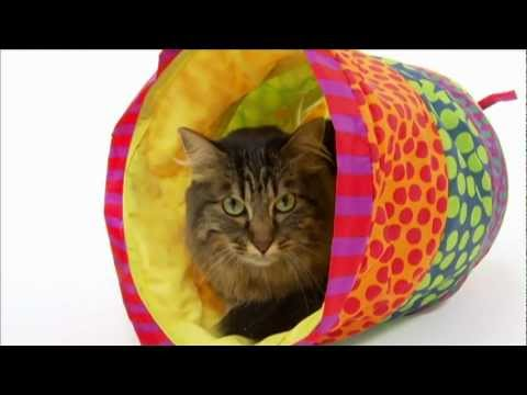 Cats 101 Maine Coon  Video  Animal Planet ** High Quality **