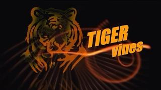 download lagu Tiger Vines Present Happy New Year gratis