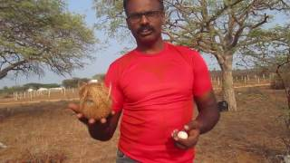 ideomotor effect - truth in finding ground water using egg and coconut