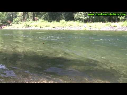 Summer Steelhead fishing low clear water!