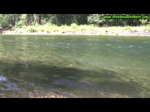 Summer Steelhead fishing low clear water!