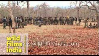 Download Naxal attack in Sukma 3Gp Mp4