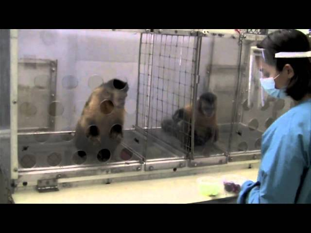 Two Monkeys Were Paid Unequally: Excerpt from Frans de Waal&#039;s TED Talk
