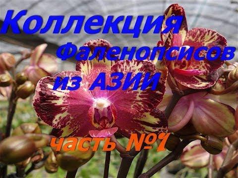 .Орхидеи.Собираю коллекцию азиатских фаленопсисов. ЧАСТЬ 1
