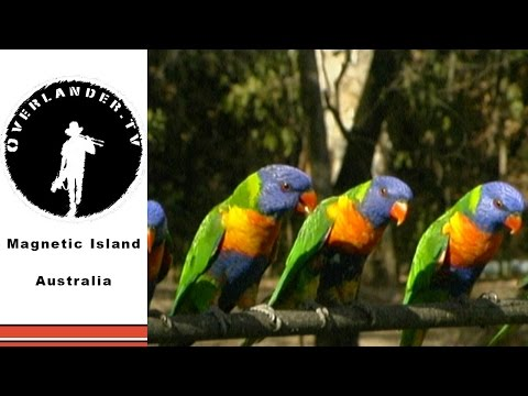 Magnetic Island -  best Australian Wildlife HD