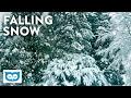 Lagu Relaxing Falling Snow - 2 Hours Peaceful Snowfall & Light Wind Noise