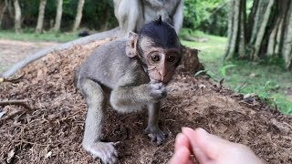 Cute baby monkey Flit eating fruit, Flit baby monkey so adorable one, so cute & playful baby monkey
