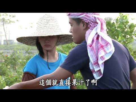 台綜-農夫與他的田-20170106 燕巢芭樂哥