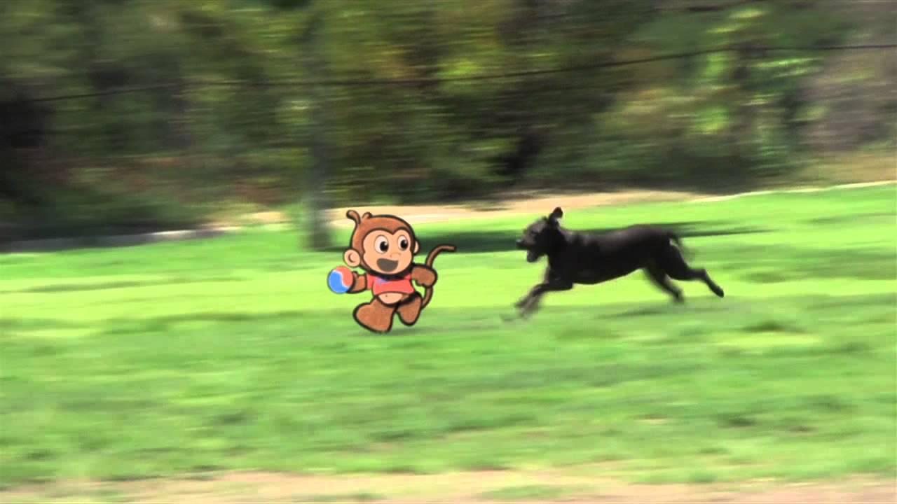 Stoopid Monkey Games Stoopid Monkey Stoopid