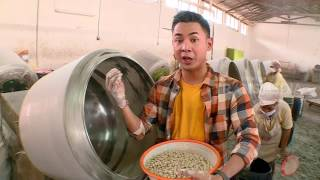 TERNYATA KACANG SHANGHAI ASLI INDONESIA