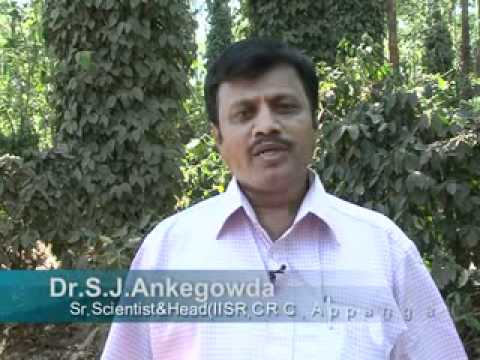 AUGMENTING BLACK PEPPER PRODUCTION-A SUCCESS STORY FROM KODAGU - Hindi.flv