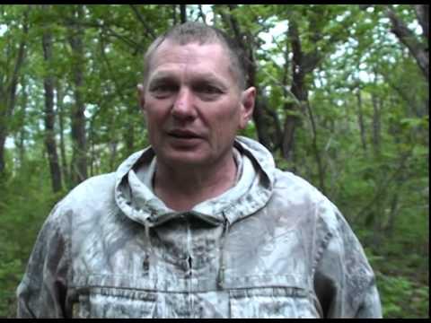 браконьеры расправились с семейством кабанов в Фокино