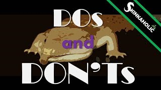 Ep. 14 - DO's and DON'Ts for Beginner Blue Tongue Skink Keepers