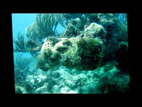 The Andersons Scuba dive in Antigua.wmv