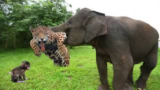 Elephant Of The God! Elephant Herd Rescue Baby Monkey From Leopard Huning