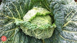 How Cruciferous Veggies Can Cut Bowel Cancer Risk | Health News Updates | Cooking Light