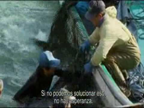 Trailer subtitulado al español documental The Cove La Calera