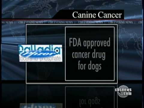 Canine Cancer Drug Approved