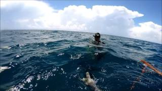 Summer Cobia Spearfishing Teaser 2016