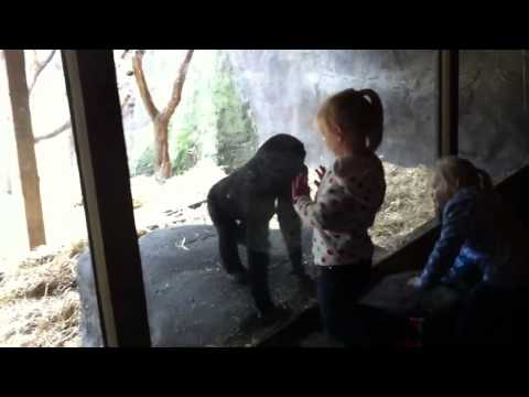 Girls playing with baby gorilla
